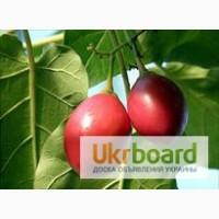 Цифомандра, томарилло, помидорное дерево