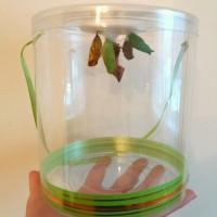 Ферма бабочек - набор из 5 шт