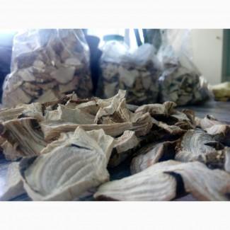 Продам корінь лаконоса сухий і в сирому вигляді