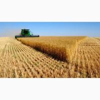 Крупная компания на постоянной основе и на выгодных условиях закупает пшеницу фуражную