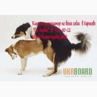 Кинолог-инструктор по вязке собак в Харькове Пес Барбос