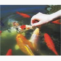 Корм для карпов кои, coppens, jpd, рыбки для пруда, аквариум, пруд, японские карпы кои, сад
