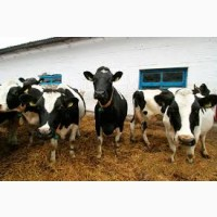Закупка лошадей баранов быков коров дорого круглосуточно