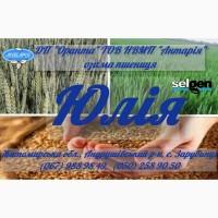 Насіння озимої пшениці ЮЛІЯ (СН, перша)