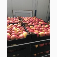 Реализуем яблоки есть большой объем 200 тонн