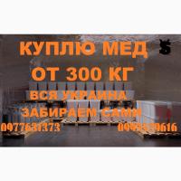 Закупка мёда мин. 300 кг. с подсолнуха и рапса. Днепропетровская и соседние обл
