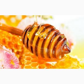 Закупка мёда у населения (от 300кг)