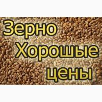Закуповуємо відходи кукурудзи (вологу кукурудзу) по Вінницькій області