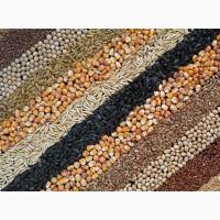 Куплю С/г зерновые, масличные, бобовые