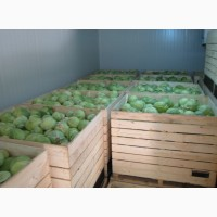 Холодильное оборудование для фруктов и овощей Алькантар ООО
