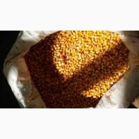 Продам кукуруз есть объемов