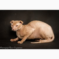 Профессиональный фотограф анималист для ваших домашних животных
