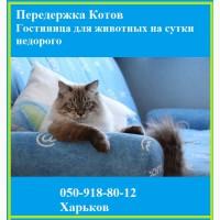 Передержка Котов. Гостиница для животных на сутки недорого