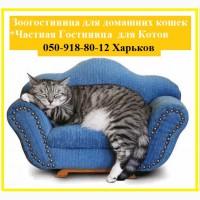 Гостиница для кошек цена доступная. Передержка котов и кошек с бесплатным трансфером