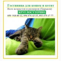 Приют гостиница для кошек. На время оставить кошку