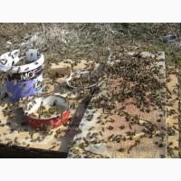 Соєве борошно для весенней подкормки пчел
