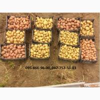 Картофель семенной (посадочный) 1 и 2 репродукции. В наличии 20 сортов
