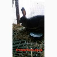 Пластиковые полы для кроликов, Пластиковый настил для кроликов, Полы для кроликов