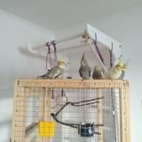 Изготовление клетки вольеры для декоративных птиц и др Ваших питомцев