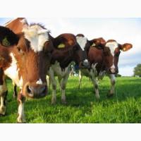 Кормовые ингредиенты для с/х животных и птиц